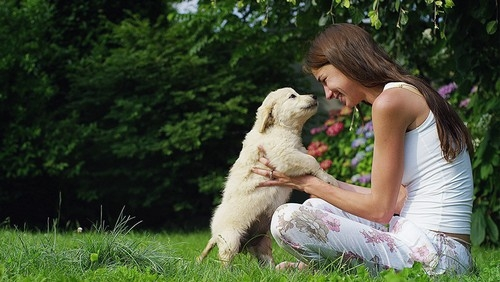 Safe Lawn and Garden Chemicals for Your Pet