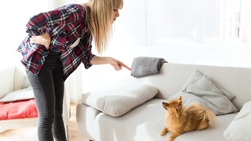 The Best Ways to Remove and Reduce Pet Hair on Your Furniture