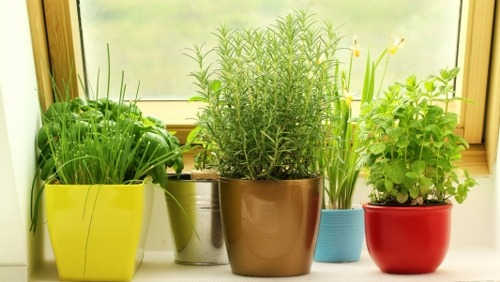 Ideas for Growing Herbs and Vegetables in Your Apartment in Innovative and Creative Ways