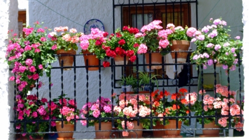 How to Spruce Up Your Balcony Garden