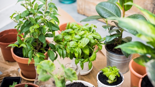 Indoor Gardening Tips that Are Easy to Follow