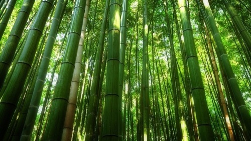 Bamboo as a Flooring Material: What You Need to Know