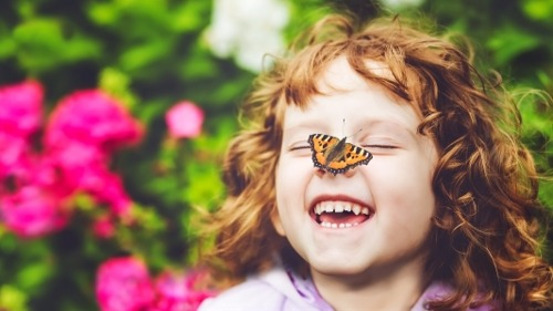 How to Create Your Own Butterfly Garden in 5 Easy Steps