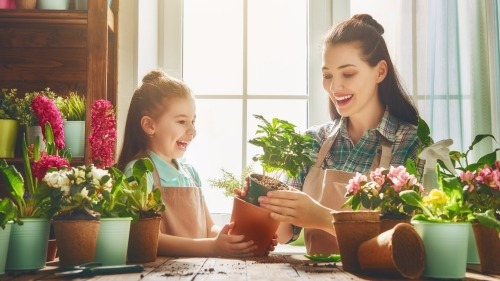 Indoor Gardening Made Easy