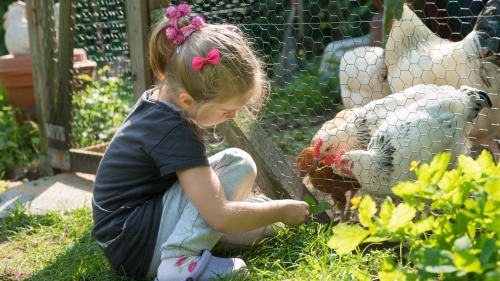 Simple Tips to Build the Ultimate Chicken Coop