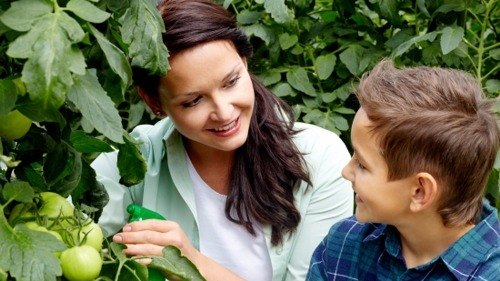 Vegetable Garden Pests: Identify & Remedy Before It's Too Late