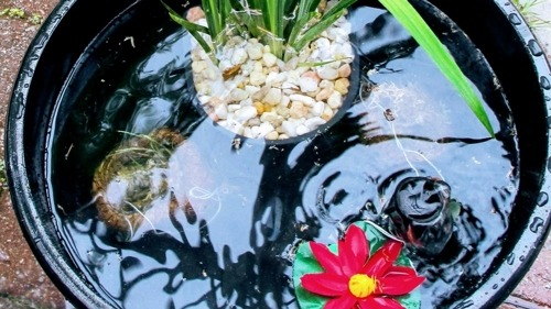 Making a Tranquil Container Pond For Less Than $70