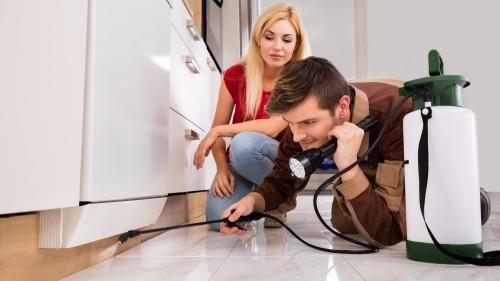 Indoor Pest Control: Should You DIY or Hire an Exterminator?