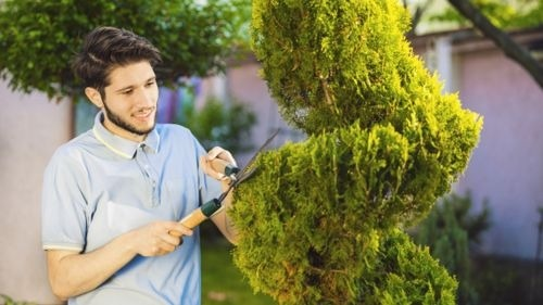 DIY Landscaping Tips to Achieve the Look of Spiraled Trees Cheaply