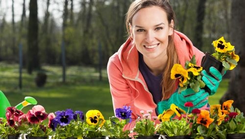 Tough Flowers That Can Thrive in Cold Climates